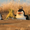 PENGUINS_OF_MADAGASCAR_620x320_2.jpg
